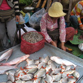 Cleaning fish in cambodia